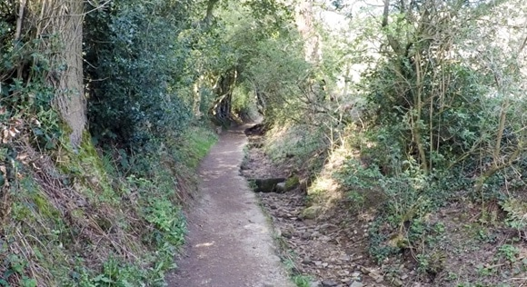 Overgrown path at the start of The Pennine Way