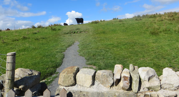 Cows-on-Whernside-route