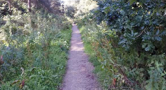 Clear path through the woods