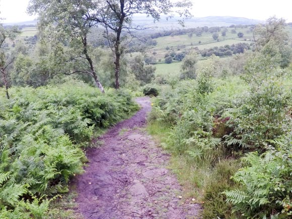Path to Robin Hood Inn