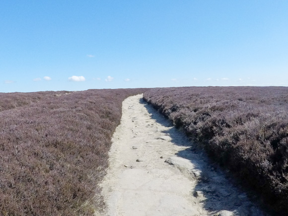 Top Withens to Haworth 5