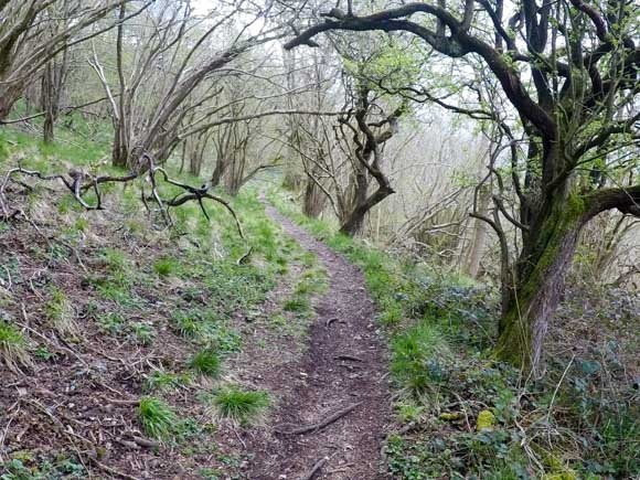 Dovedale to Milldale Walk 37